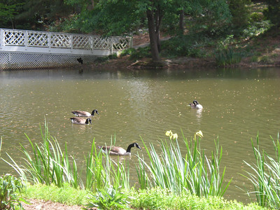 Vines Botanical Gardens - May 2010