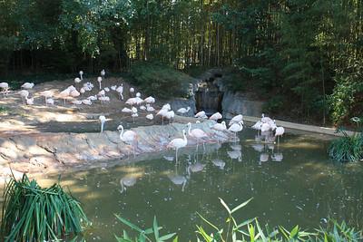 Zoo Atlanta - 10/10/10